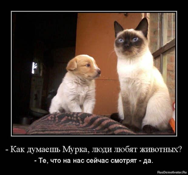Демотиваторы про животных - Демотиваторы с животными