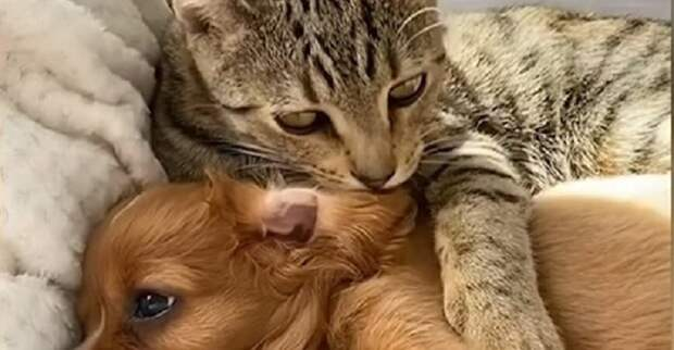 Как щенка-потеряшку защищал бездомный кот