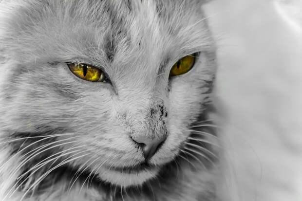 Коты реально защищают дом от злых духов и негативной энергии!