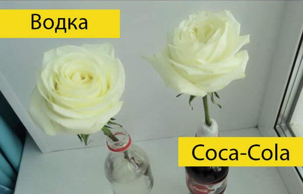 Необычные эксперимент: в чем розы простоят дольше