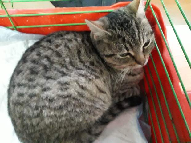 Дикая кошка обрела дом, но все еще боится людей и не верит, что еда никогда не закончится