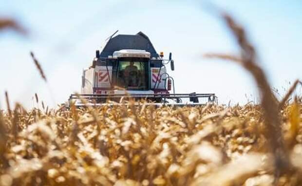 В. Катасонов: «Нас ждет дефицит зерна и рост цен на хлеб»