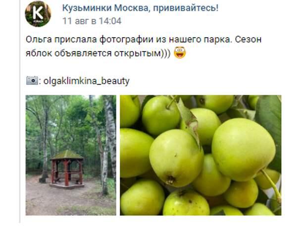 В парке «Кузьминки-Люблино» поспели яблоки