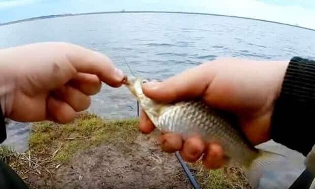 Когда начинают ловить весеннего карася - советы бывалых рыбаков