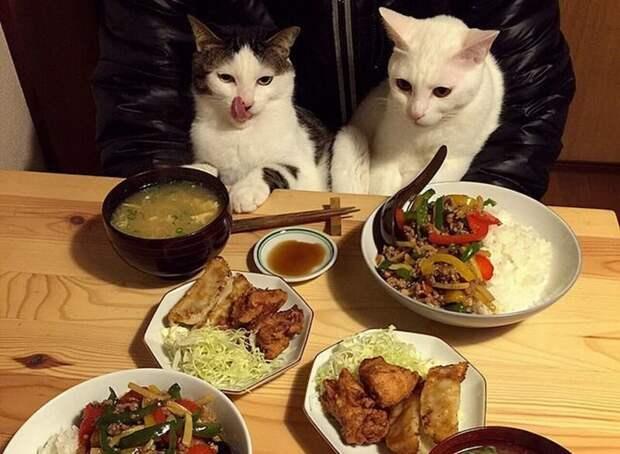 Любопытные дегустаторы: забавные реакции двух кошек на еду хозяев дегустация, еда, животные, кот, коты, позитив, реакция, юмор