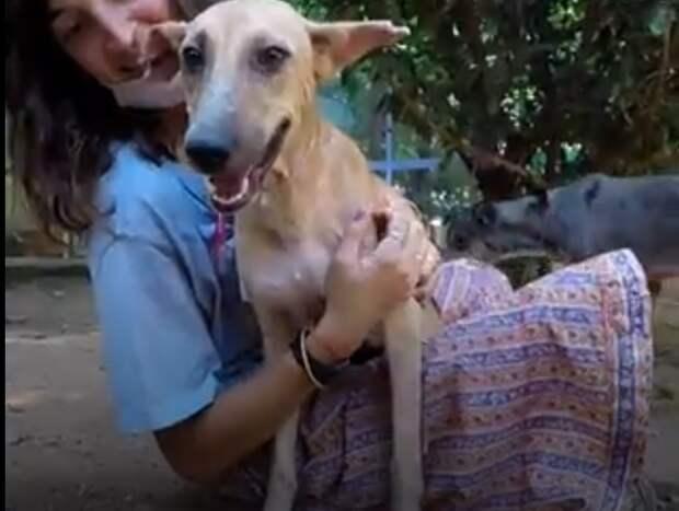 счастливая собака в приюте
