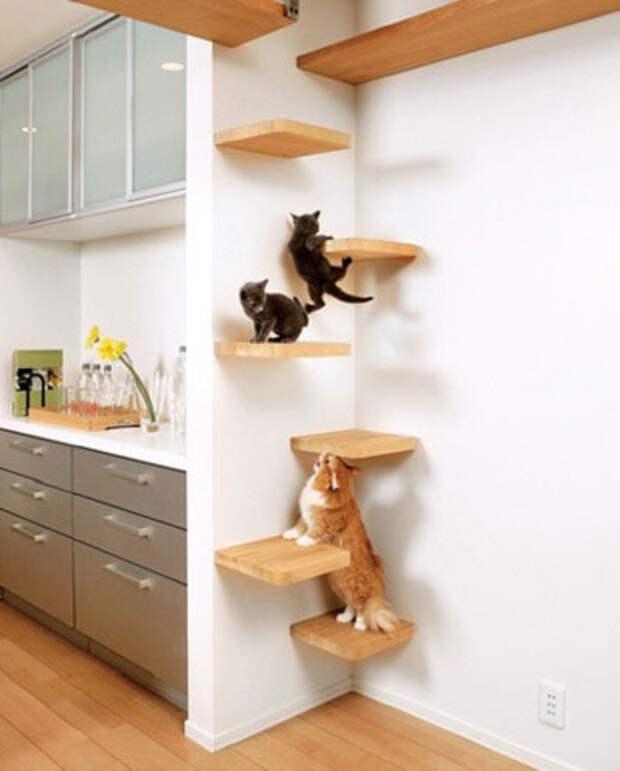 Дизайн для котов, украшаем дом с пользой