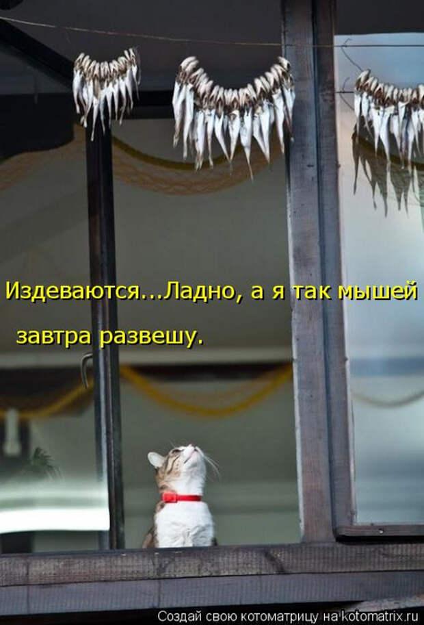 1586540427_kotomatrica-5 (475x700, 260Kb)