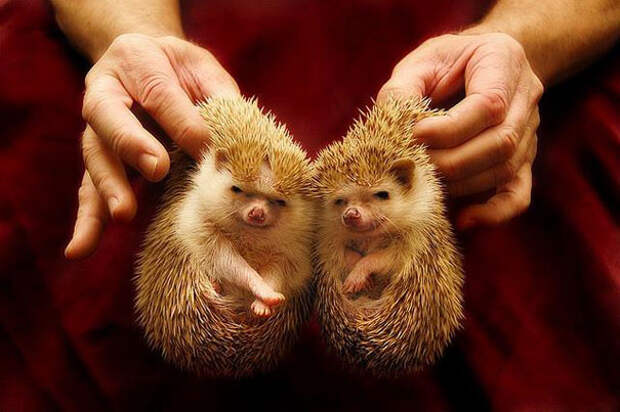 Животные-близнецы - 25 очаровательных фото-16