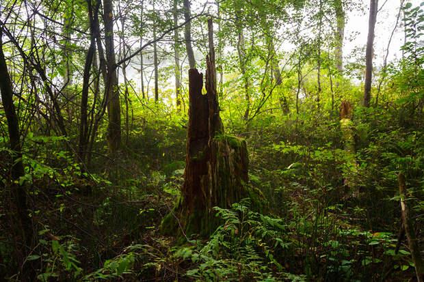 национальный парк бикин природа