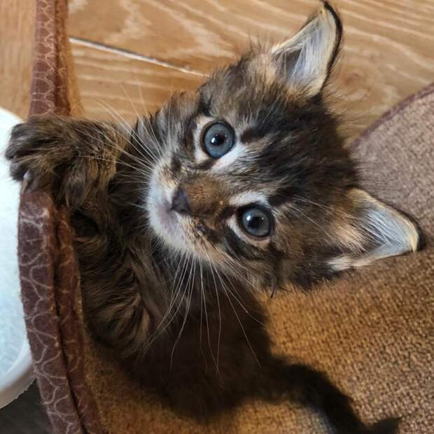 У брошенного на жаре раненого котенка не было шансов выжить, если бы не добрые люди