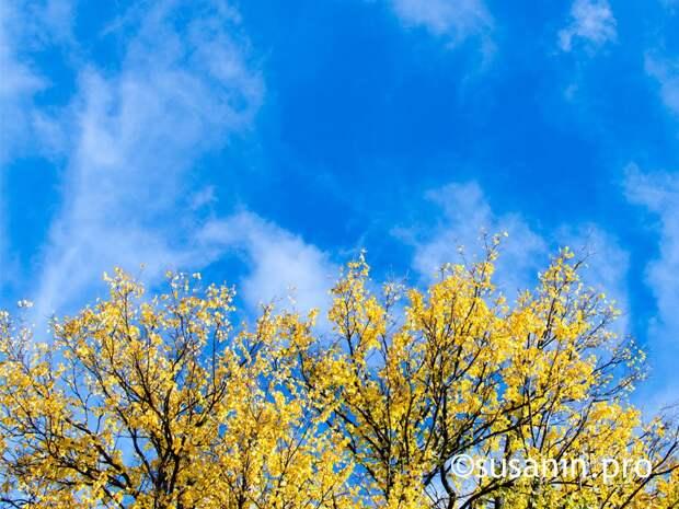 Ветер усилится в Удмуртии в первый день октября