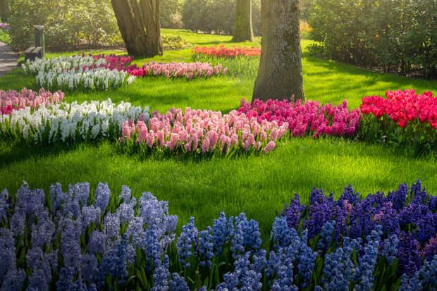 Цветение тюльпанов во время коронавируса: снимки Альберта Дроса