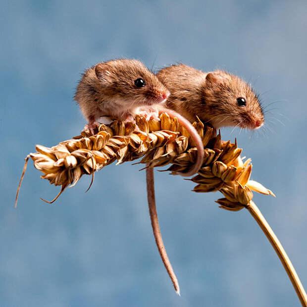 Животные-близнецы - 25 очаровательных фото-52