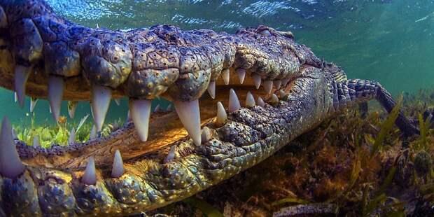5 крокодилов-гигантов: они выросли до размера динозавров
