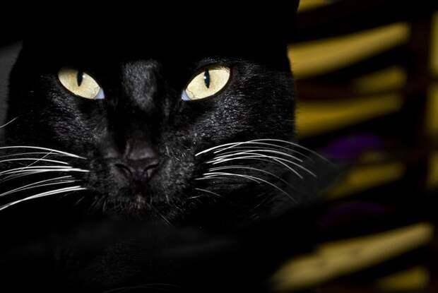 Чувствуют ли кошки смерть? животные, коты, факты