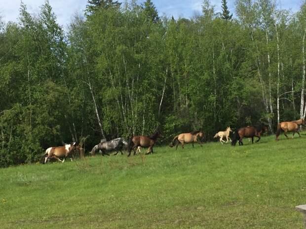 Табун лошадей жил с нами по соседству