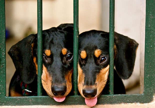 Животные-близнецы - 25 очаровательных фото-6