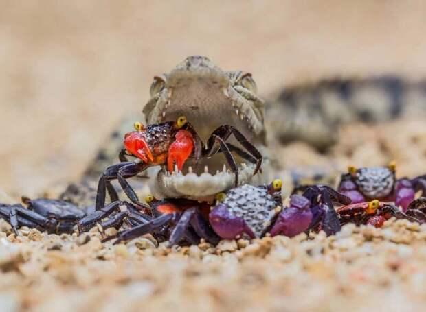 Потрясающие снимки животных во время их обеда