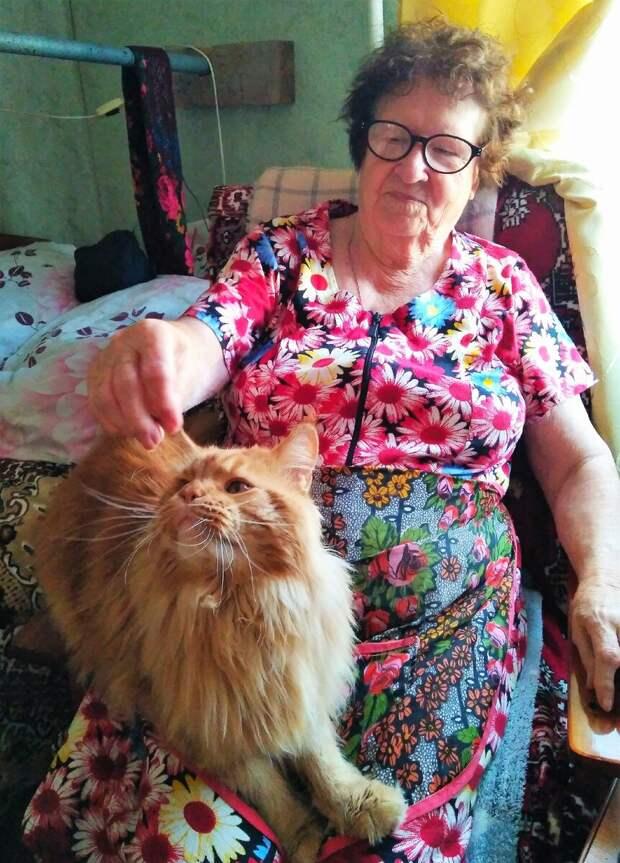 Любят кошки бабушек