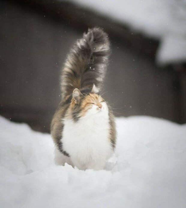 Котики максимальной степени пушистости (
