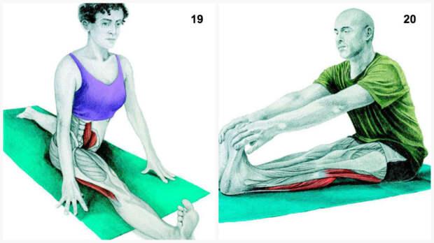 34 картинки о том, какие именно мышцы вы растягиваете во время разных упражнений