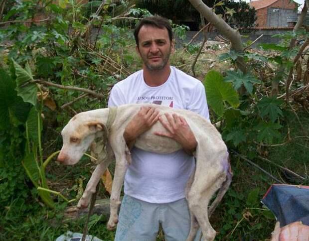 Он Бог? Уникальный случай спасения собаки