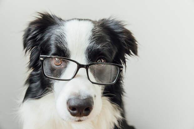Собака в США стала миллионером после смерти хозяина