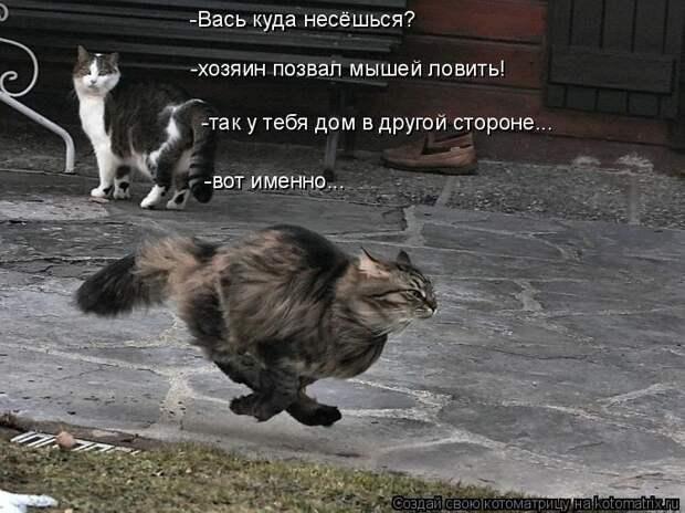 Котоматрица: -Вась куда несёшься? -хозяин позвал мышей ловить! -так у тебя дом в другой стороне... -вот именно...