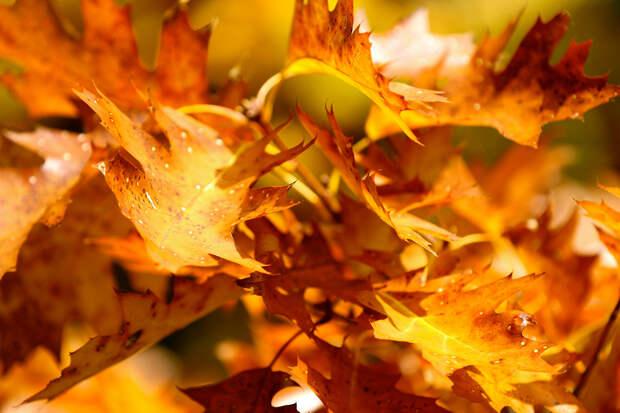 Осень. (Se Re)