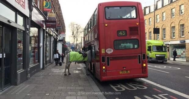 Общественный транспорт Лондона открыт для всех пассажиров автобус, люди, метро, общественный транспорт, работа, электричка