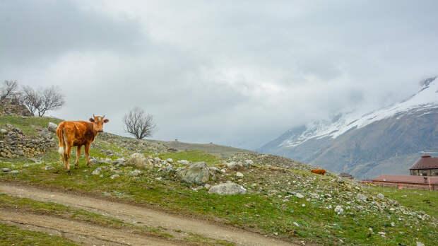 10 фото, которые заставят вас влюбиться в горы Северной Осетии
