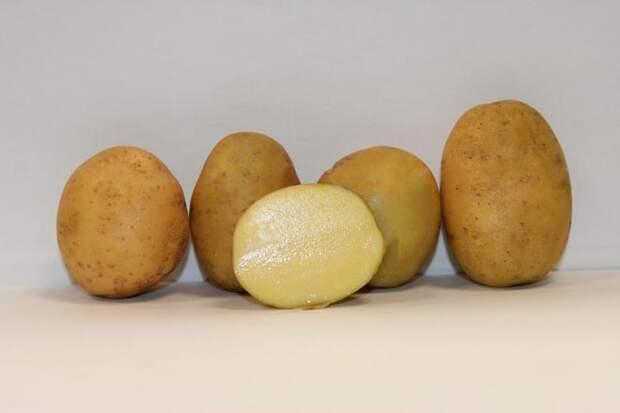 картофель импала срез