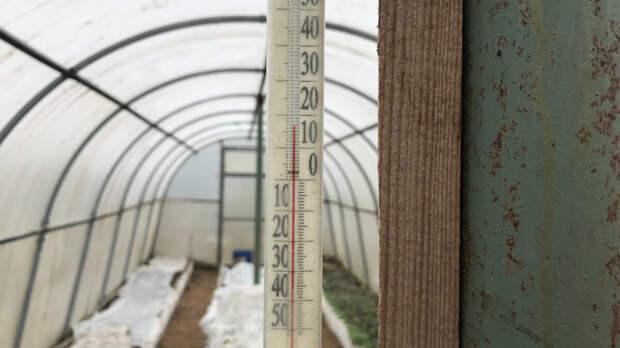 Опытная соседка рассказала, какие ошибки допускают почти все садоводы и огородники