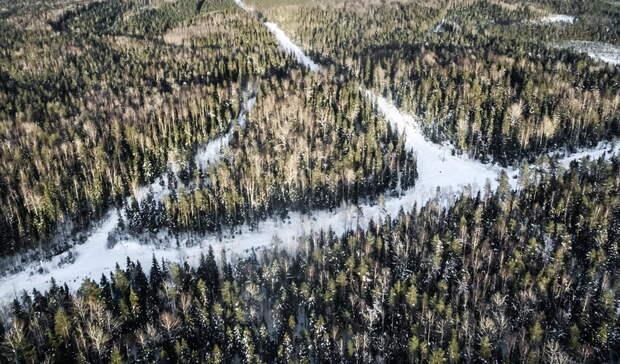 Сразу несколько лесных предприятий в Карелии поменяли директора