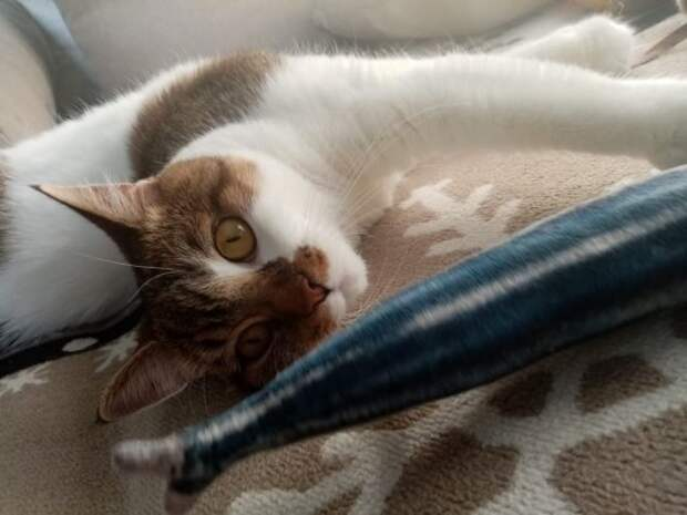 Игры с кошками. Самые популярные вопросы зоопсихологу.