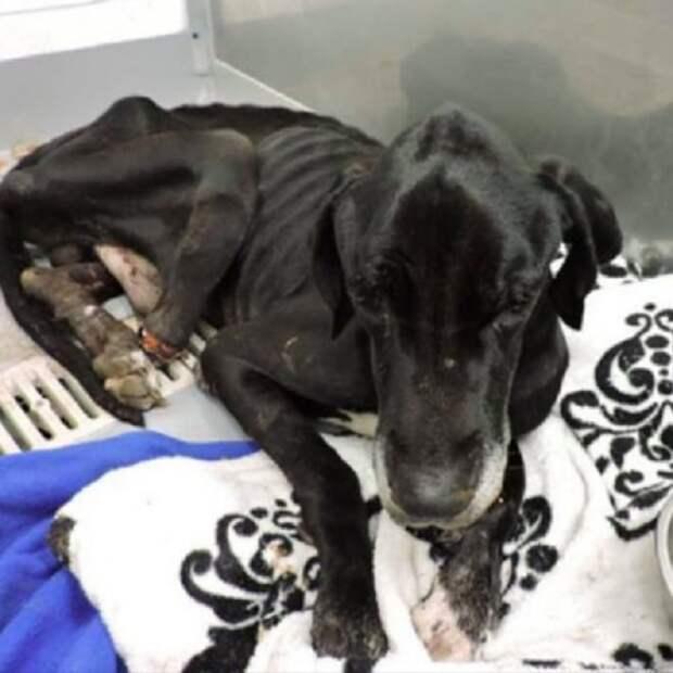 Привязанный к столбу, бедный пес отгрыз себе часть лапы, пытаясь спасти собственную жизнь