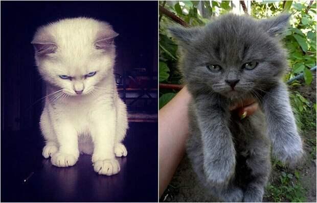 Такие разные, но уже независимые малыши-котята.