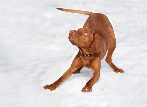 dog-1194082_960_720.jpg