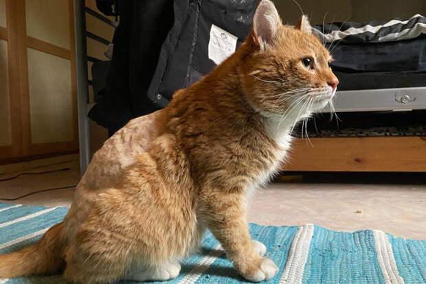 Кот нашёлся в Финляндии спустя восемь лет после пропажи