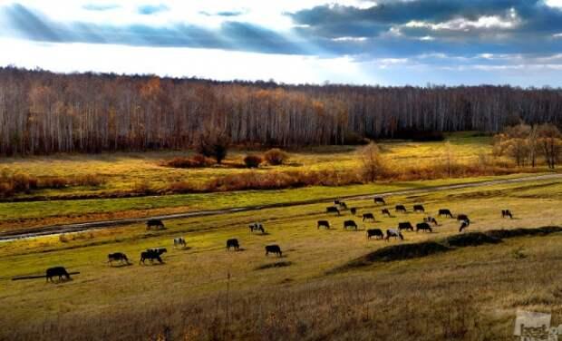 Лучшие фотографии России 2012