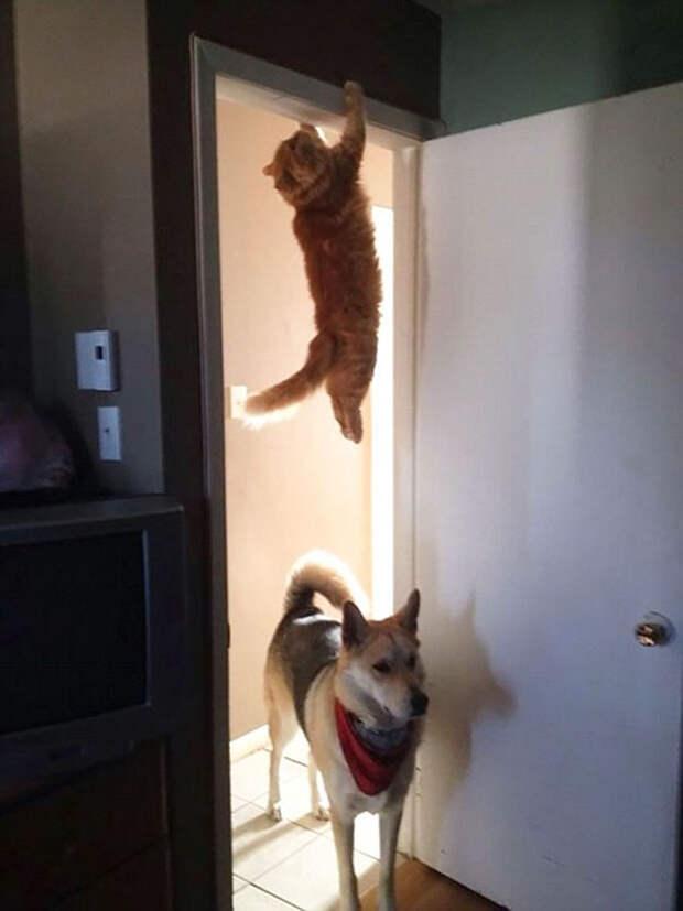 10 фото кошек, которые нарушили законы физики