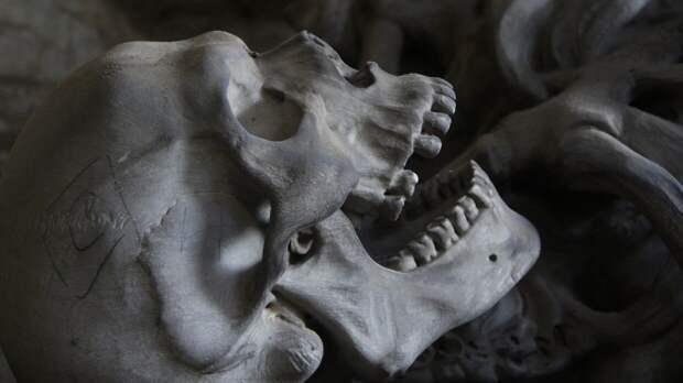Житель Барнаула нашел человеческий скелет в местном парке
