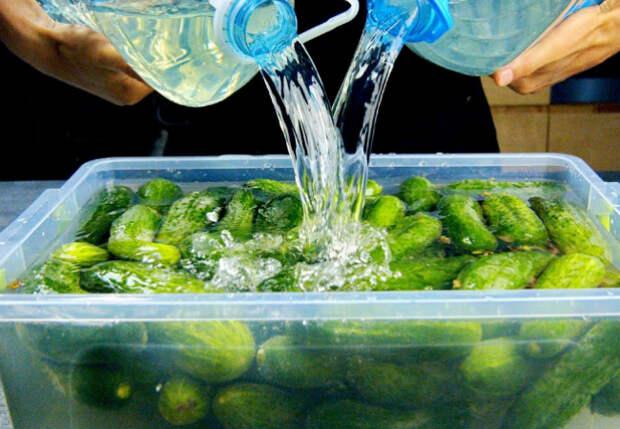 Огурцы не закатываем, а маринуем в ящике: хрустящие соленья готовятся сами