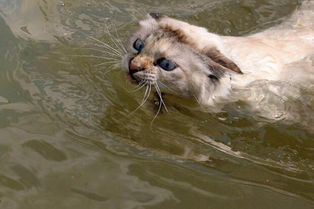 почему коты не любят воду