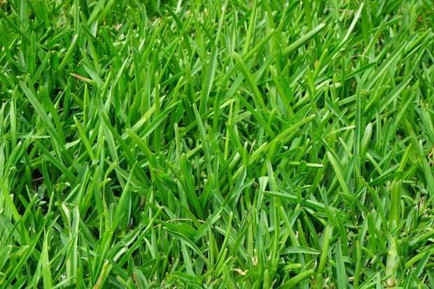 Вместо вытоптанного газона на Дубнинской появится зеленая лужайка