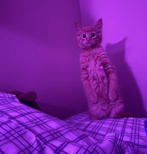 15+ доказательств того, что котики — те же люди, только мягкие и пушистые