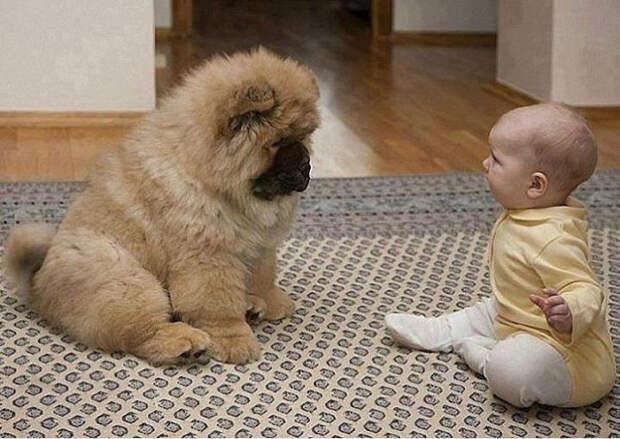 дети должны расти с домашними животными (9)