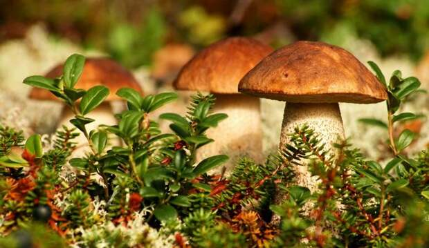 Почему только русские едят грибы из леса