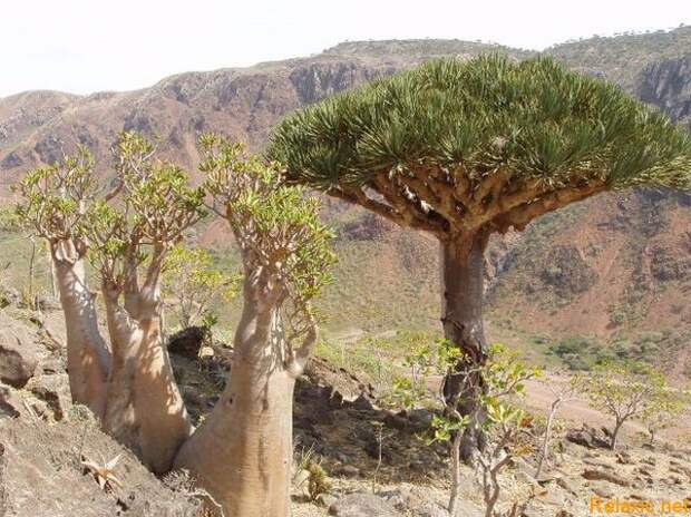 Socotra_014